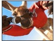 """Kangaroo Jack"" Movie still"